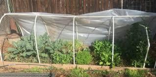 winter vegetable garden california