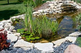 pond design plants versus rock edges
