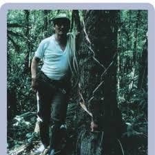 Abel Rodríguez Tun, chiclero, extrayendo látex de un árbol de... | Download  Scientific Diagram