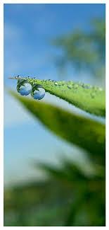 Lovepik صورة Jpg 400397533 Id خلفيات بحث صور المطر الندى خلفية