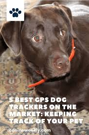 5 Best Gps Dog Trackers 2020 Reviews And Buying Guide Dog Tracker Dog Brain Dog Gps