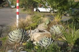 the nitty gritty of desert garden design