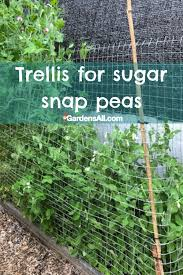 Trellis For Sugar Snap Peas Gardensall