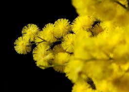Festa della Donna - Fiori Trieste, consegna a domicilio di fiori a ...