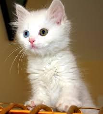 عالم الحيوان بالفيديو سقطات قطط مضحكة