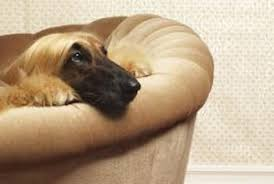 how to make dog repellent for furniture