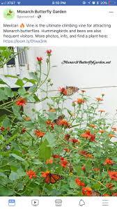 Pin by Adeline Powell on Flowers & decorative plants in 2020 | Plants,  Monarch butterfly garden, Butterfly garden