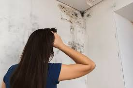 toxic mold in your home in korea