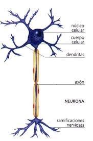 Los golpes en la cabeza rompen las neuronas