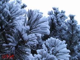 ورد وثلج صور الأعضاء الساحة العمانية