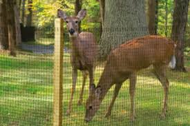 Suffolk Supreme Court Overturns Zoning Board Denial Of Deer Fence Application Long Island Land Use And Zoning