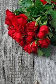 red red rose love romantic roses