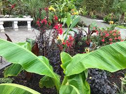 tropical garden in a uk climate
