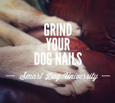 dog nail trims part 5 how to trim your