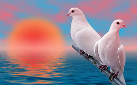 hd wallpaper birds beautiful white