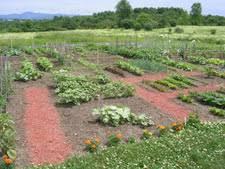 edible landscaping vegetable garden