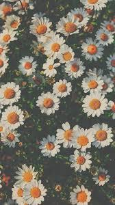 Pin by Priyanka Karekar on Aesthetic wallpaper in 2020 | Flowers  photography wallpaper, Flower iphone wallpaper, Daisy wallpaper