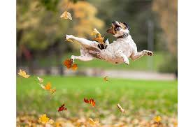 12 Dogs Who Absolutely Fall for Autumn Leaves - PetGuide