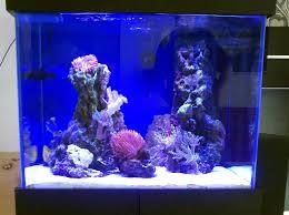 Nasze akwarium F