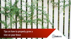 Are Your Vines Good For Your Fence Chainwire Fencing Specialist