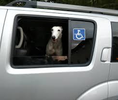 Canine Handicap Window Decal Dog Nation
