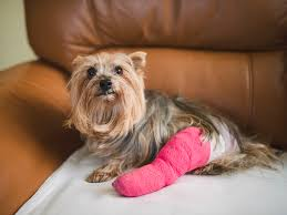 mon injuries in dogs