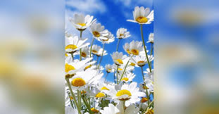 Summer Anne Leatherman Obituary - Visitation & Funeral Information