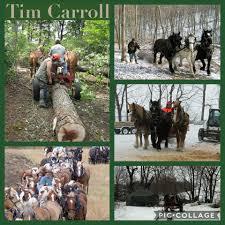 draft horse journal tim carroll tim