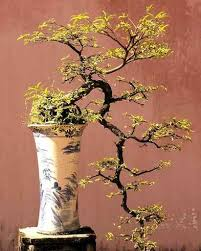Bonsai Wall Decal Design 1 Wallmonkeys Com