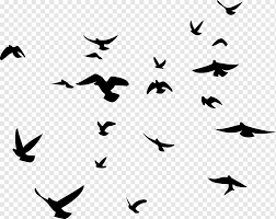 Bird Wall Decal Silhouette Wallhogs Bird Animals Monochrome Symmetry Png Pngwing