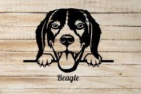 Beagle Peeking Out Window Vinyl Decal Sticker Can Be Customized Tacustomgraphix