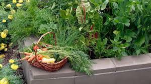 high value produce for square foot