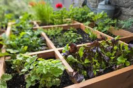 grow vegetables in a small garden
