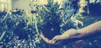 start a successful gardening business