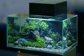 Aquarium Stock Photos, Royalty Free Aquarium Images | Depositphotos®