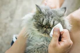 what causes watery cat eyes and do you