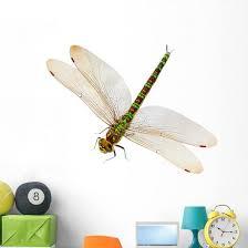 Dragonfly Wall Decal Wallmonkeys Com