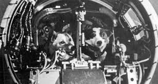 Уникальное историческое видео: как Белка и Стрелка летали в космос ...