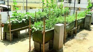 rooftop vegetable garden in kerala in