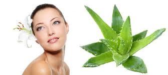 6 homemade aloe vera face creams the