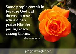 gratitude quote devotional programming life