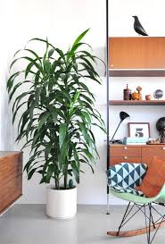 23 of the easiest houseplants you can