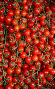 red cherry tomato lot tomatoes puglia