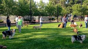 Petition Do You Support A Fenced Off Leash Dog Park In The Bantry Bay Area Change Org
