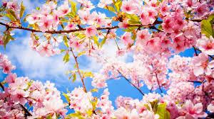 صور وخلفيات لفصل الربيع 2020 جميلة Beautiful Wallpapers For Spring Hd