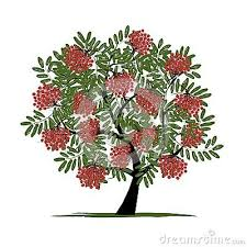 Image result for rowan tree clipart