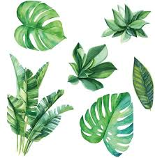 Amazon Com Amaonm Removable 3d Nordic Green Plants Fresh Leaves Wall Decals Nursery Decor Leaf Wall Stickers Diy Wall Art Decor Decoration Sticker For Home Living Room Girls Bedroom Offices Leaf Home
