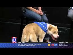 PRISCILLA - Fox 13 Best Friend from Humane Society of Utah - YouTube