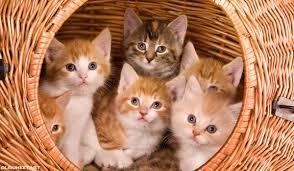 اسماء قطط اناث 2020 الم حيط
