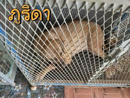 วอชด็อก แฉแหลก นิติฯคอนโดหอบ หมาพิทบูล - แม่ เจ๊หงษ์ ยัดเยียดกลางดึก